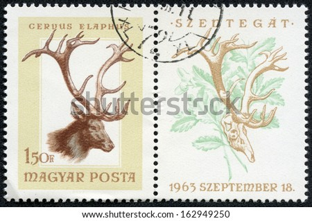 HUNGARY - CIRCA 1963: post stamp printed in Hungary (Magyar) shows red deer (cervus elaphus) from hunting trophies - animals in natural colors series, Scott catalog 1784 A383 1.50fo brown, circa 1963 - stock photo