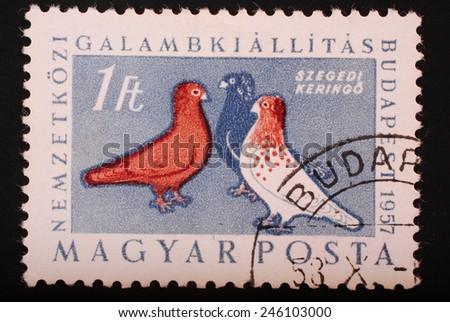 Hungary - Circa 1957: Postage stamp printed in Budapest shows image of three colorful pigeons on a blue background - philately themes animals - stock photo