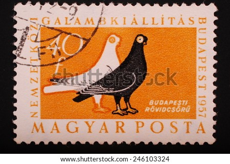 Hungary - Circa 1957: Postage stamp printed in Budapest shows image of two doves black and white on a yellow background - philately themes animals - stock photo