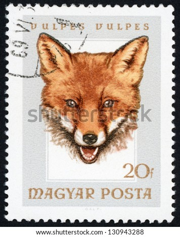 HUNGARY - CIRCA 1966: stamp printed in Hungary (Magyar) shows european red fox (vulpes vulpes); hunting trophies - animals in natural colors series, Scott catalog 1780 A383 20f gray brown, circa 1966 - stock photo