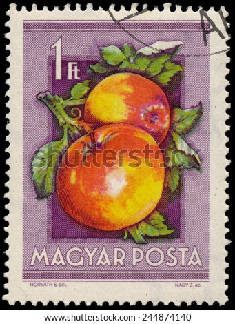 "HUNGARY - CIRCA 1954: Stamp printed in Hungary shows Apples, from the series ""National Agricultural Fair"", circa 1954  - stock photo"
