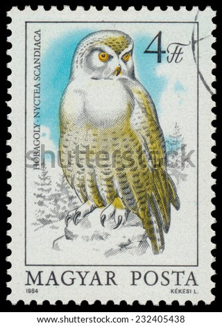 "HUNGARY - CIRCA 1984: stamp shows image of a Snowy Owl, with the inscription ""Nyctea Scandiaca"", from the series ""Owls"", circa 1984"