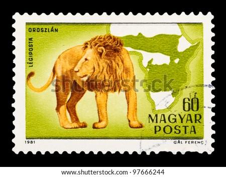 HUNGARY - CIRCA 1981: The postal stamp printed in HUNGARY shows Panthera leo, series animals, circa 1981 - stock photo