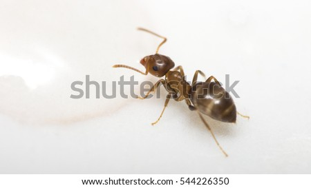 Ants Kitchen Stock Images, Royalty-Free Images & Vectors ...