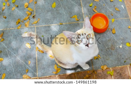 hungry cat wait for food - stock photo