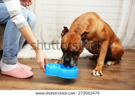 Hungry dog on home interior background - stock photo