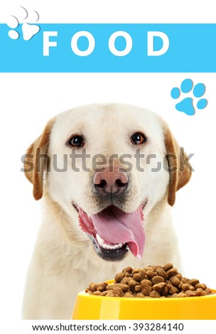 Hungry dog with bowl of tasty food, isolated on white - stock photo