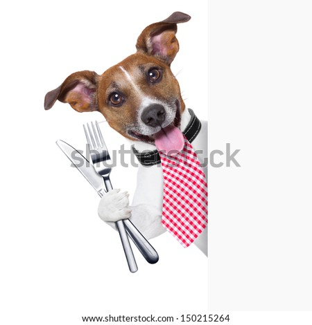 hungry dog with cutlery waiting for the meal - stock photo