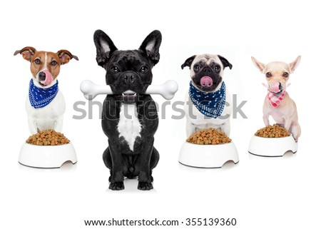 hungry   dogs   isolated on white background - stock photo