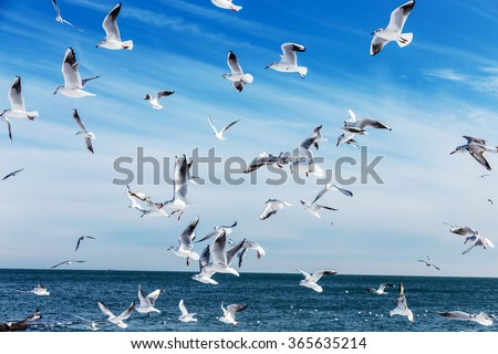 Hungry gulls circling over the winter beach in search of food on a background of sea and blue sky. Sea birds in flight in search of food. - stock photo