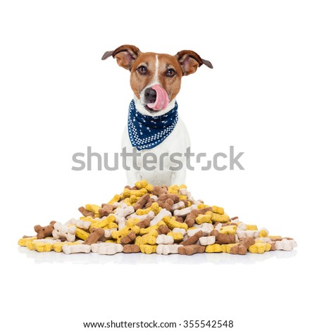 hungry  jack russell dog behind  a big mound or cluster of food , isolated on white background - stock photo