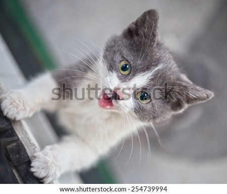 Hungry little cat - stock photo