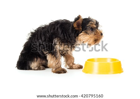 Hungry puppy sitting beside food dish isolated - stock photo