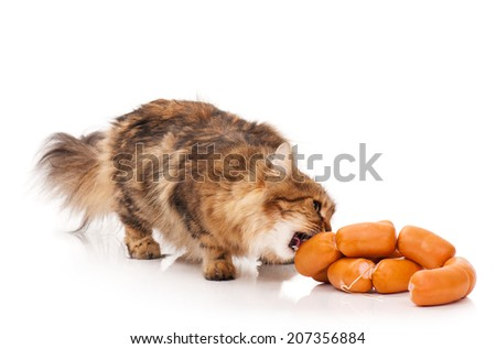 Hungry siberian cat biting delicious sausages over white background - stock photo