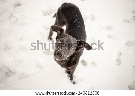 Hungry stray dog during winter - stock photo