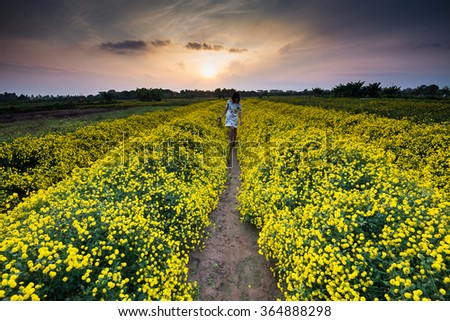 HUNGYEN, VIETNAM - FEB 16, 2016 :Young girl in yellow daisy field in Hung Yen, VIetnam. This kind of flower is used for traditional medicine in Vietnam.