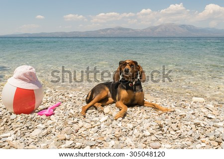 Hunt dog wearing sunglasses resting at a beach. - stock photo
