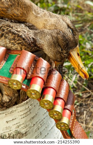 Hunting ammunition and duck on a wooden stump - stock photo