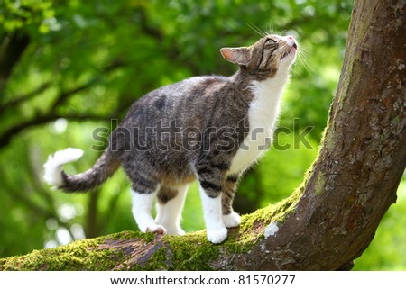 Hunting cat on a tree - stock photo