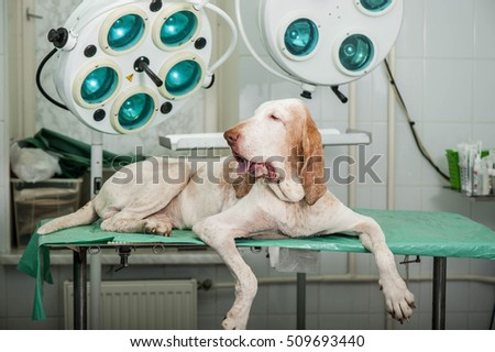 Hunting dog in animal hospital