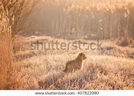 Hunting dog in the foggy morning in forest - stock photo