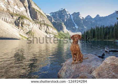 hunting dog sitting on a rock by a high altitude glacier lake with cliffs i the background - stock photo