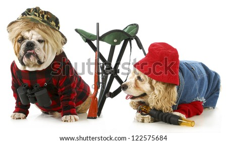 hunting dogs - american cocker spaniel and english bulldog dressed up like hunting dogs isolated on white background - stock photo