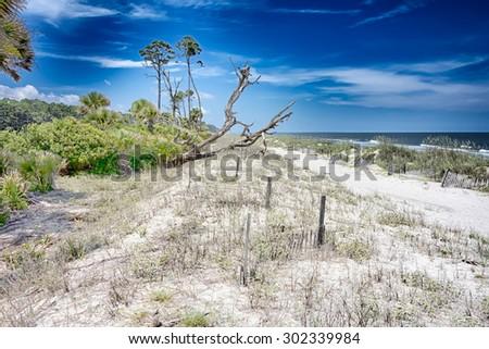 hunting island beach scenes  - stock photo
