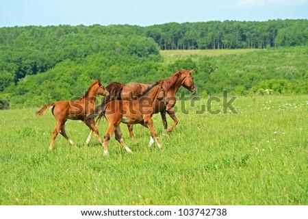 hurrying Horse - stock photo