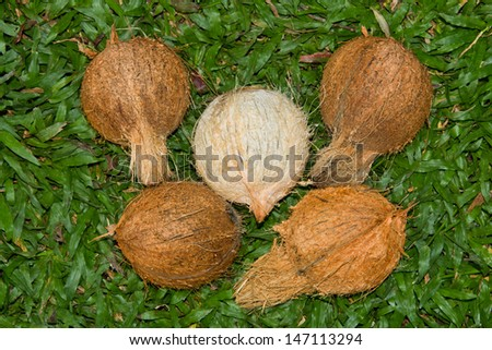Husked coconuts - stock photo