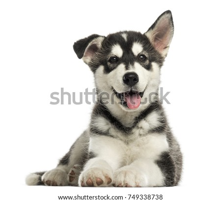 dog face stock images royaltyfree images  vectors
