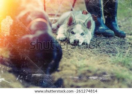 Husky puppy dog nature playing with dachshund  - stock photo