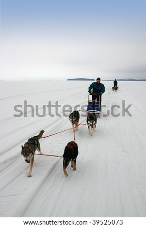 Husky safari on frozen lake in Finland - stock photo