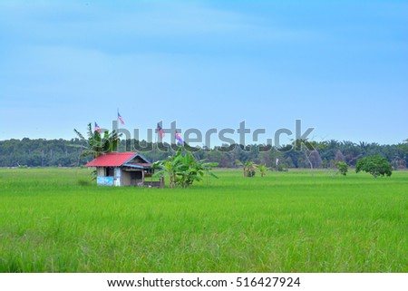 Hut in the rice fields paddy