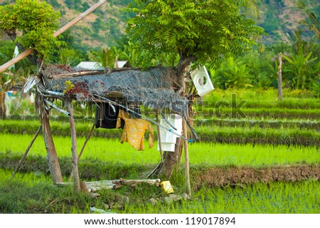 Hut with drying laundry in a Bali rice field