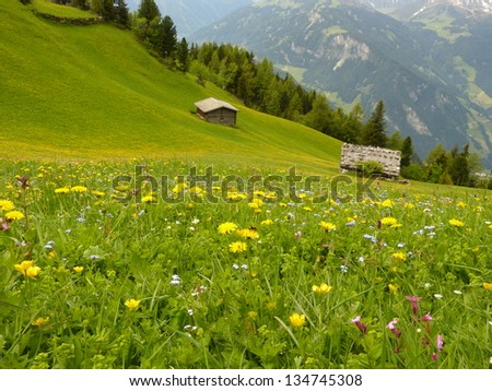 Huts on the alpine meadow - stock photo