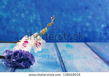 hyacinth flower and white orchid on blue wood copy space background - stock photo