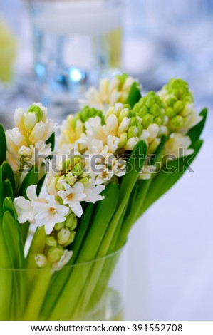 Hyacinth flower composition in glass vases. - stock photo