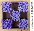 Hyacinth flowers arranged in a printers box - stock photo