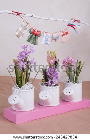 Hyacinth flowers bouquet in kettles composition - stock photo