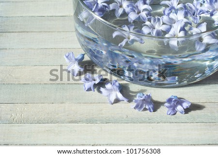 hyacinth flowers in aroma bowl