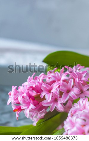 Hyacinth pink flower spring flower perfume stock photo royalty free hyacinth pink flower spring flower the perfume blooming spring closeup texture mightylinksfo