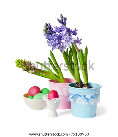 Hyacinths and Easter eggs are isolated on a white background