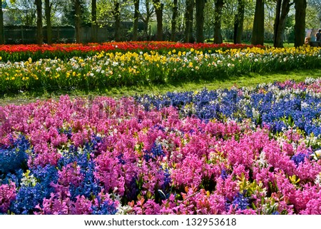 Hyacinths, narcissuses and tulips  in the park. Spring landscape.