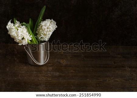 hyacinths on a dark background - stock photo