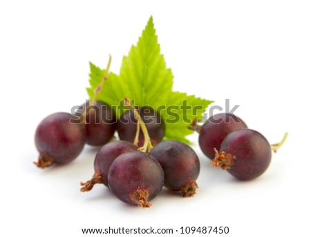 hybrid gooseberry and black currant isolated on white