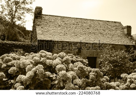 Hydrangea bushes near old farm house. Brittany, France. Vacation at countryside background. Aged photo. Sepia. - stock photo
