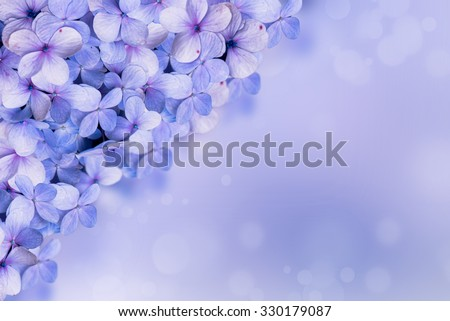 Hydrangea flora background.