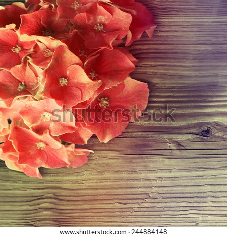 Hydrangea flower on wooden background. - stock photo