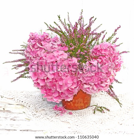 hydrangea flowers with in pot - stock photo
